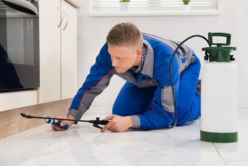 5 Reasons To Hire An Extermination Service