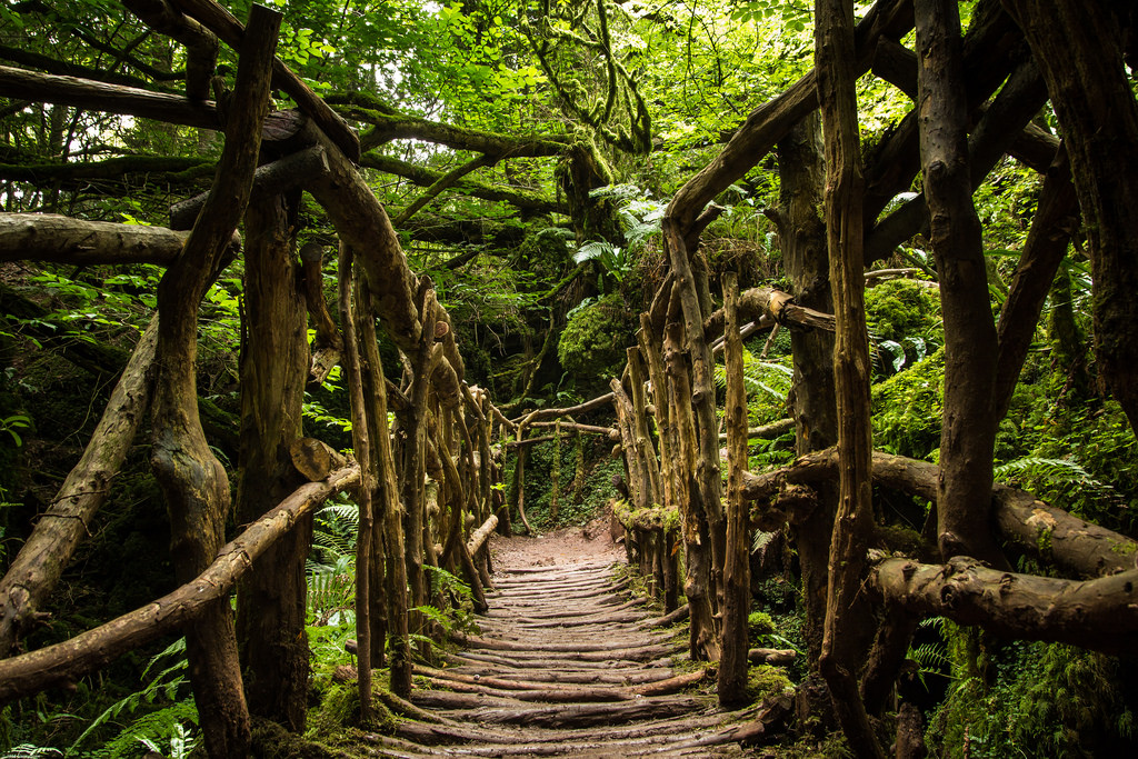 The Forest Of Romance and Mystery