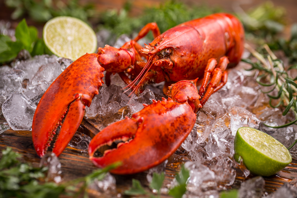 Choose Only The Best Lobsters and Don't Settle For Anything Less